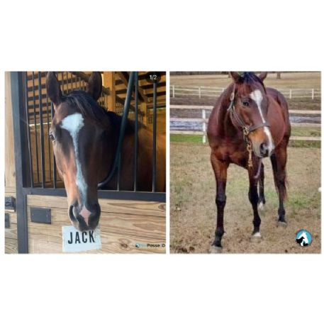 RECOVERED Horse - Jack - RECOVERED 2/26/21