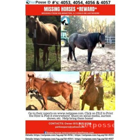 RECOVERED Horse - Dixie - RECOVERED - REWARD