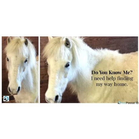 FOUND mini | pony Horse