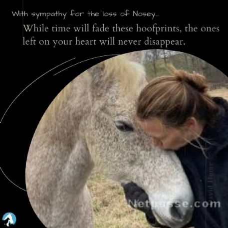 RECOVERED Horse - Nosey - Found Deceased