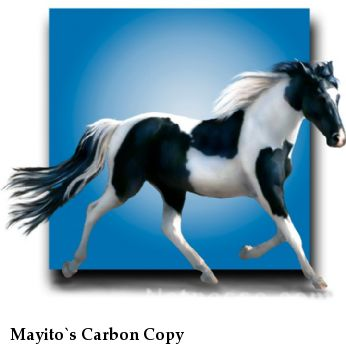 Mayito`s Carbon Copy