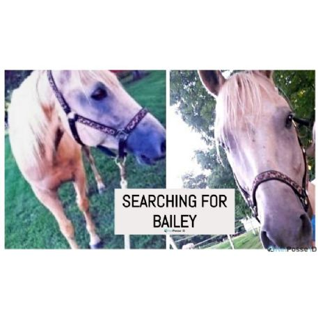 SEARCHING FOR Horse - Bailey - REWARD