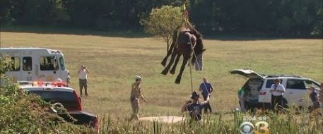 Crews In Chester County Rescue Clydesdale Horse Stuck In The Mud