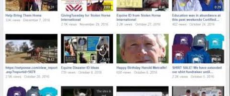 Check out the Stolen Horse International Videos on our Facebook Page