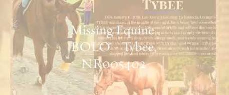 NetPosse.com Found, Missing, Lost & Stolen Horses January 2018