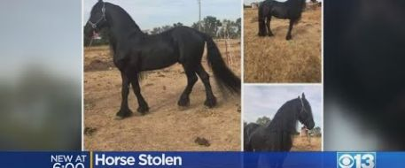 Owner Still Searching for Horse Stolen The Day After Christmas
