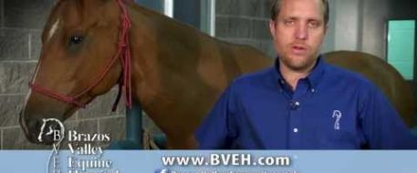 INSTRUCTIONS: How to microchip a horse