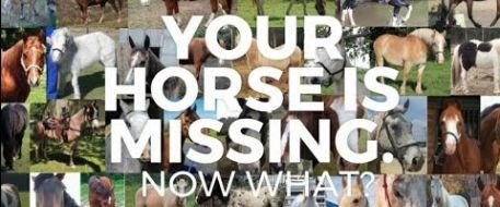 VIDEO - MY HORSE IS MISSING. WHAT DO I DO NOW?