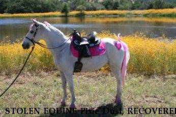 STOLEN EQUINE Pixie Dust, RECOVERED Near Queen Creek, AZ, 85142