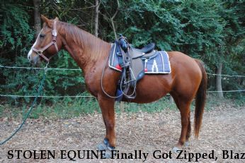 STOLEN EQUINE Finally Got Zipped, Blaze Near Dallas, TX, 75236