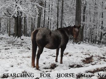 SEARCHING FOR HORSE Star, Near Cookeville, TN, 38506