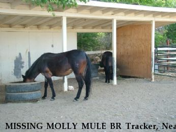 MISSING MOLLY MULE BR Tracker, Near Gold Hill, NV, 89440