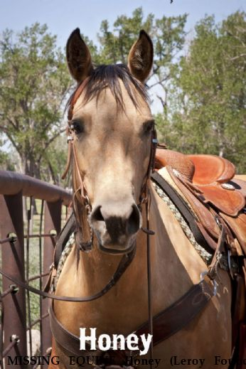 MISSING EQUINE Honey (Leroy Found) Near Antinito, CO, 81120