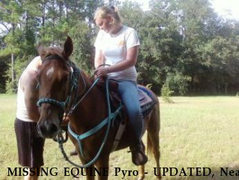 MISSING EQUINE Pyro - UPDATED, Near Wilmer, AL, 36587