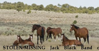 STOLEN/MISSING Jack Black Band of Mustang Near San Luis, CO, 81152