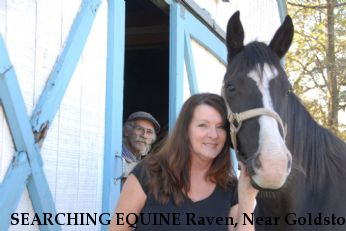 SEARCHING EQUINE Raven, Near Goldston , NC, 27252