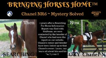 SEARCHING HORSE HISTORY Chanel NR 6,  SOLVED Near Groveland, , 34736