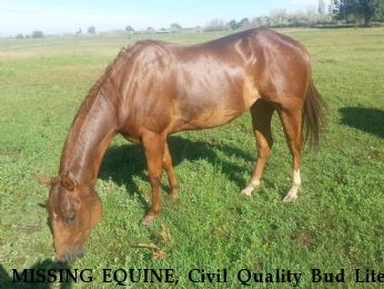MISSING EQUINE, Civil Quality Bud Lite,  Near Grandview, WA, 98930