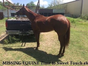 MISSING EQUINE Time to Sweet Touch aka Sweetie, REWARD  Near Houston, TX, 77048