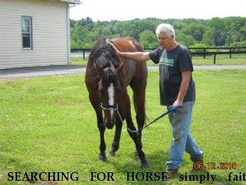 SEARCHING FOR HORSE simply faith tattoo 4f096, REWARD  Near jackson, NJ, 08527