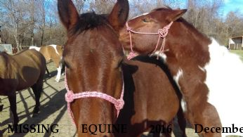 MISSING EQUINE 2016 December Prancer-bay mare Star-paint mare Near INDEPENDENCE, MO, 64055
