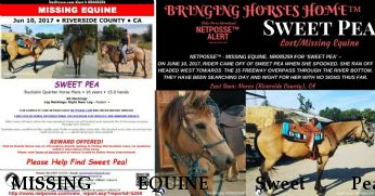 MISSING EQUINE Sweet Pea, REWARD RECOVERED June 14, 2017 Near Norco, CA, 92860