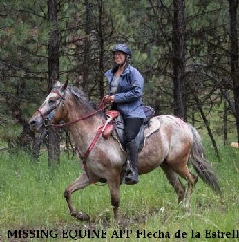 MISSING EQUINE APP Flecha de la Estrella 'Fletch', $500.00 REWARD** see reward section for additional information Near Sisters, OR, 97759