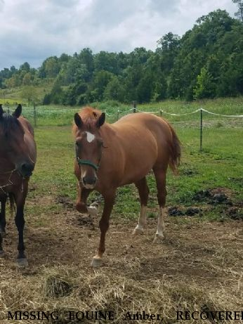 MISSING EQUINE Amber,  RECOVERED Near Marshville, NC, 28103