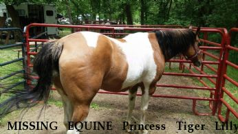 MISSING EQUINE Princess Tiger Lilly,  Near Ionia, MI, 48846