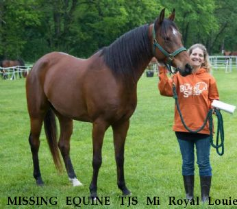 MISSING EQUINE TJS Mi Royal Louie,  Near Hesperia, MI, 49421