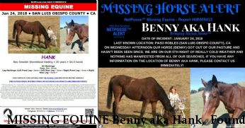 MISSING EQUINE Benny aka Hank,  Found & Home 2/2/18 Near Paso robles, CA, 93446