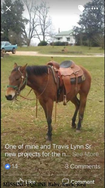 MISSING EQUINE Baby, Buck, Red & Suzy, REWARD - RECOVERED 2/12/2018 Near Central, SC, 29630