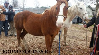 FOUND EQUINES Red & Whitey Near Sturgis, MS, 39773