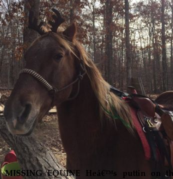 MISSING EQUINE He's puttin on the cash , REWARD  Near Nunnelly , TN, 37137