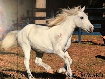 STOLEN EQUINE Coco, Nick REWARD - RECOVERED   Near Cypress , TX, 77429