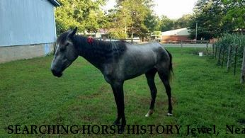 SEARCHING HORSE HISTORY Jewel,  Near Bastrop, LA, 71220