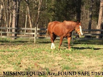 MISSING EQUINE Ace, FOUND SAFE 7/16/18 Near Salisbury, NC, 28146