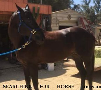 SEARCHING FOR HORSE Lincecum, REWARD - RESOLVED 8/7/18 Near Chatsworth, CA, 91311