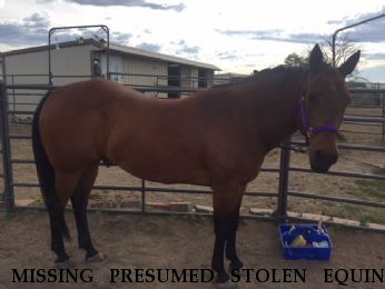 MISSING PRESUMED STOLEN EQUINE Taur Dees Friend, LOCATED 7/20/2018 Near Broomfield, CO, 80020
