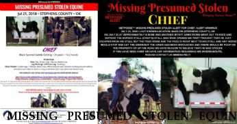 MISSING PRESUMED STOLEN EQUINE Boogie's War Eagle Teejay aka Chief, $500.00 REWARD  Near Marlow, OK, 73055