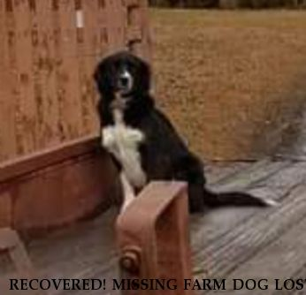 RECOVERED! MISSING FARM DOG LOST ANIMAL Whiskey,  Near Lapine, AL, 36046