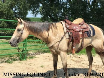 MISSING EQUINE, Civil - Cookie, REWARD  - RESOLVED 8/6/18 Near Milltown, WI, 54848
