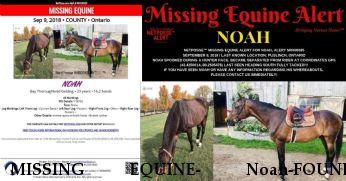 MISSING EQUINE- Noah-FOUND DECEASED Near Puslinch, Ontario, N3C 2V4