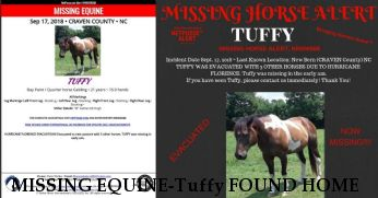 MISSING EQUINE-Tuffy FOUND HOME & SAFE Near New Bern, NC, 28562