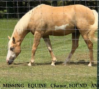 MISSING EQUINE Chance, FOUND AND HOME! Near North little rock, AR, 72117