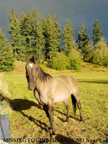 MISSING EQUINE-Hank FOUND Near Lake Stevens, WA, 98258