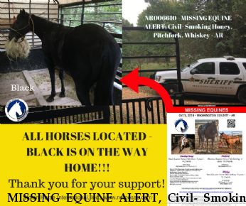 MISSING EQUINE ALERT, Civil- Smoking Honey, LOCATED SAFE Pitchfork, Whiskey Near Fayetteville, AR, 72704