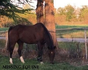 MISSING EQUINE #9, RECOVERED HOME SAFE!! Near Wetumpka, AL, 36092