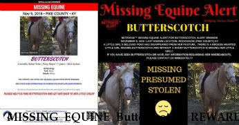 MISSING EQUINE Butterscotch, REWARD  Near Rockhouse , KY, 41561