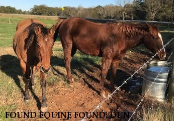 FOUND EQUINE FOUND: DUN & SORREL MARE / OGLETHORPE CO., GEORGIA,  Near Comer , GA, 30630